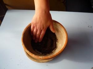 Riempire il vaso di terriccio, senza pressarlo troppo