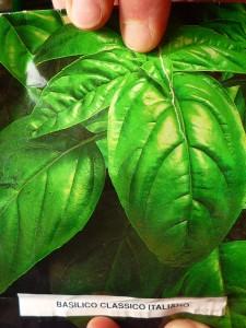 Semina basilico piantare basilico coltivare l 39 orto for Coltivare il basilico
