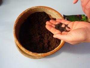 Spargere i semi di basilico nel vaso