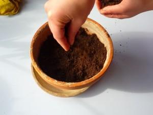 Ricoprire i semi con un sottile strato di terriccio