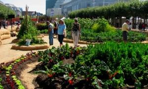orti urbani roma coltivare l 39 orto