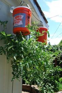 coltivare orti capovolti