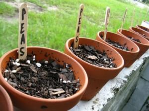 semina vasi orto