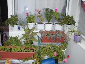 Erbe selvatiche orto terrazzo coltivare l 39 orto for Orto da terrazzo
