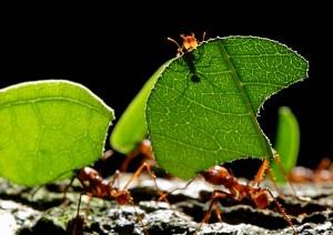 Rimedi naturali contro le formiche coltivare l 39 orto for Rimedi naturali contro le formiche bicarbonato